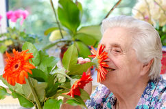 Grandmother with flowers Stock Photography