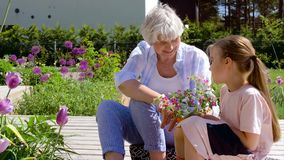 Grandmother and girl planting flowers at garden stock video