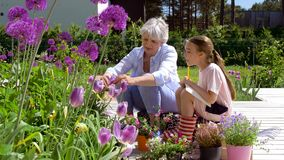 Grandmother and girl study flowers at garden stock video footage