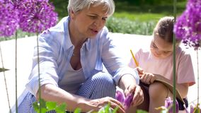 Grandmother and girl study flowers at garden stock footage