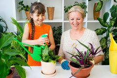 Grandmother and grandaughter. Are gardening together growing plants Stock Images
