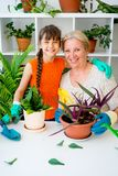 Grandmother and grandaughter. Are gardening together growing plants Stock Photography