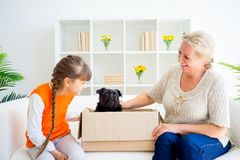 Grandmother and grandaughter. Are playing with a dog together Stock Image