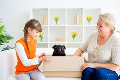 Grandmother and grandaughter. Are playing with a dog together Royalty Free Stock Photo