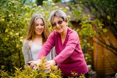 Grandmother with grandchild gardening Stock Images