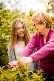 Grandmother with grandchild gardening Royalty Free Stock Photography