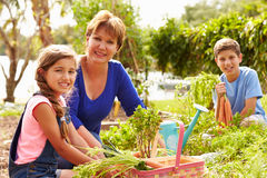 Grandmother With Grandchildren Working On Allotment Stock Image