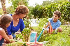 Grandmother With Grandchildren Working On Allotment royalty free stock image