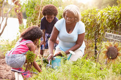 Grandmother And Grandchildren Working On Allotment Royalty Free Stock Photography