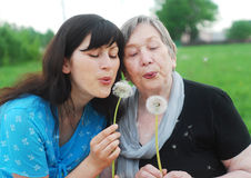 Grandmother and granddaughter. Happy grandmother and grand daughter with dandelions on the meadow Royalty Free Stock Image