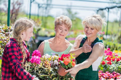 Grandmother and granddaughter choosing potted flowers. Grandmother and granddaughter choosing potted flowers with assistance of experienced gardener in a Royalty Free Stock Photo