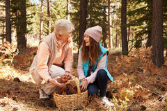 Grandmother and granddaughter collect pine cones in forest Stock Images