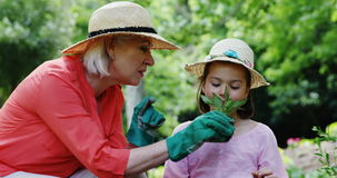 Grandmother and granddaughter gardening in the park. On a sunny day stock video footage