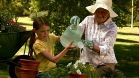 Grandmother and granddaughter gardening together stock video
