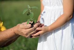 Grandmother and granddaughter holding a plant together Royalty Free Stock Photo