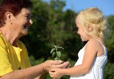 Grandmother and granddaughter holding a plant together. Grandmother and granddaughter holding a plant in hands together Stock Images