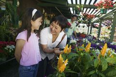 Grandmother with granddaughter looking at plants in nursery Stock Photography