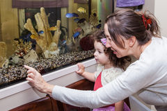 Grandmother and granddaughter near aquarium. Grandmother and granddaughter looking at fishes in home aquarium Stock Photography