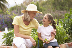 Grandmother And Granddaughter Working In Vegetable Garden Stock Photo