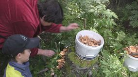 Grandmother and grandson gather mushrooms stock footage