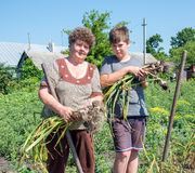 Grandmother with grandson harvested garlic harvest in garden. Grandmother with grandson harvested garlic harvest in the garden Royalty Free Stock Photo