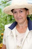 Grandmother grows tomatoes in her garden Stock Images