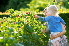 Grandmother and her baby girl picking raspberries Royalty Free Stock Photography