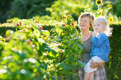 Grandmother and her baby girl picking raspberries Royalty Free Stock Images