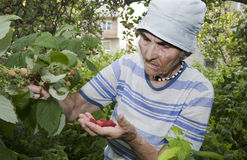 Grandmother and in her garden Royalty Free Stock Photo