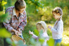 Grandmother and her girls picking mushrooms Royalty Free Stock Photo