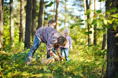 Grandmother and her girls picking mushrooms Royalty Free Stock Images