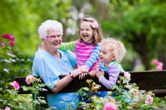 Grandmother and kids sitting in rose garden. Happy senior lady playing with little boy and girl in blooming rose garden. Grandmother with grand children sitting Stock Images