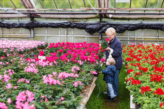 Grandmother with little boy in greenhouse with  geranium flowers Royalty Free Stock Photo