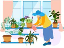 Grandmother, a pensioner watering indoor flowers. Winter garden, potted flowers. In minimalist style Cartoon flat Vector. Illustration vector illustration