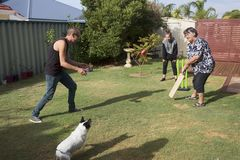 Grandmother Playing Cricket. The child, grandchild and family dog fielding in a game of Back Yard Cricket as Grandmother is batting Royalty Free Stock Images