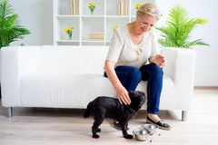 Grandmother with a dog Royalty Free Stock Image
