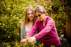 Grandmother shows granddaughter how to prune plants Royalty Free Stock Images