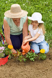 Grandmother teaching child the basics of gardening. Planting flowers together Royalty Free Stock Image