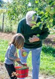 Grandpa and child picking apples in Michigan royalty free stock photography