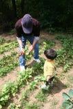 Grandpa de ayuda del muchacho en el jardín foto de archivo