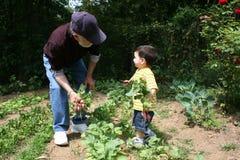Grandpa de ayuda del muchacho en el jardín Imagen de archivo