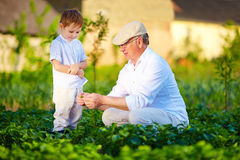 Grandpa explains to curious grandson the nature of plant growth Stock Photos