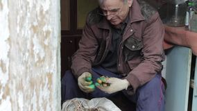 Grandpa goes through the potatoes,the elderly man working the potato,the village HD stock footage