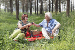Grandpa and grandma doing picnic in wood. royalty free stock photography