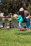 Grandpa helps little girl feed ducks at lake Royalty Free Stock Photo