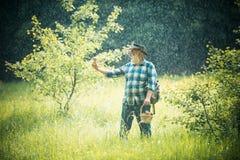grandpa Riunire i funghi selvaggi Pioggia calda della primavera Il nonno riunisce la foresta dei funghi in primavera immagini stock
