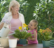 Grandparent gardening Stock Image