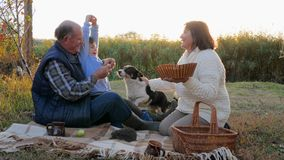 Grandparent with grandchild are sitting on blanket near pet on picnic against autumn nature background stock video footage