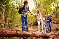 Grandparents and teens walking on a fallen tree in a forest Stock Images