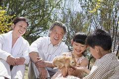 Grandparents with their grandchildren and their pet rabbit sitting in the park in springtime Stock Photography